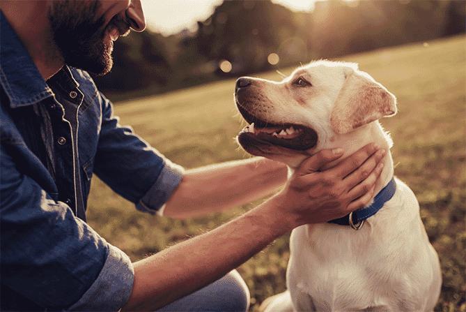 Man petting dog with blue collar