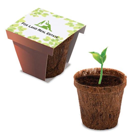 Plant Starter Kit