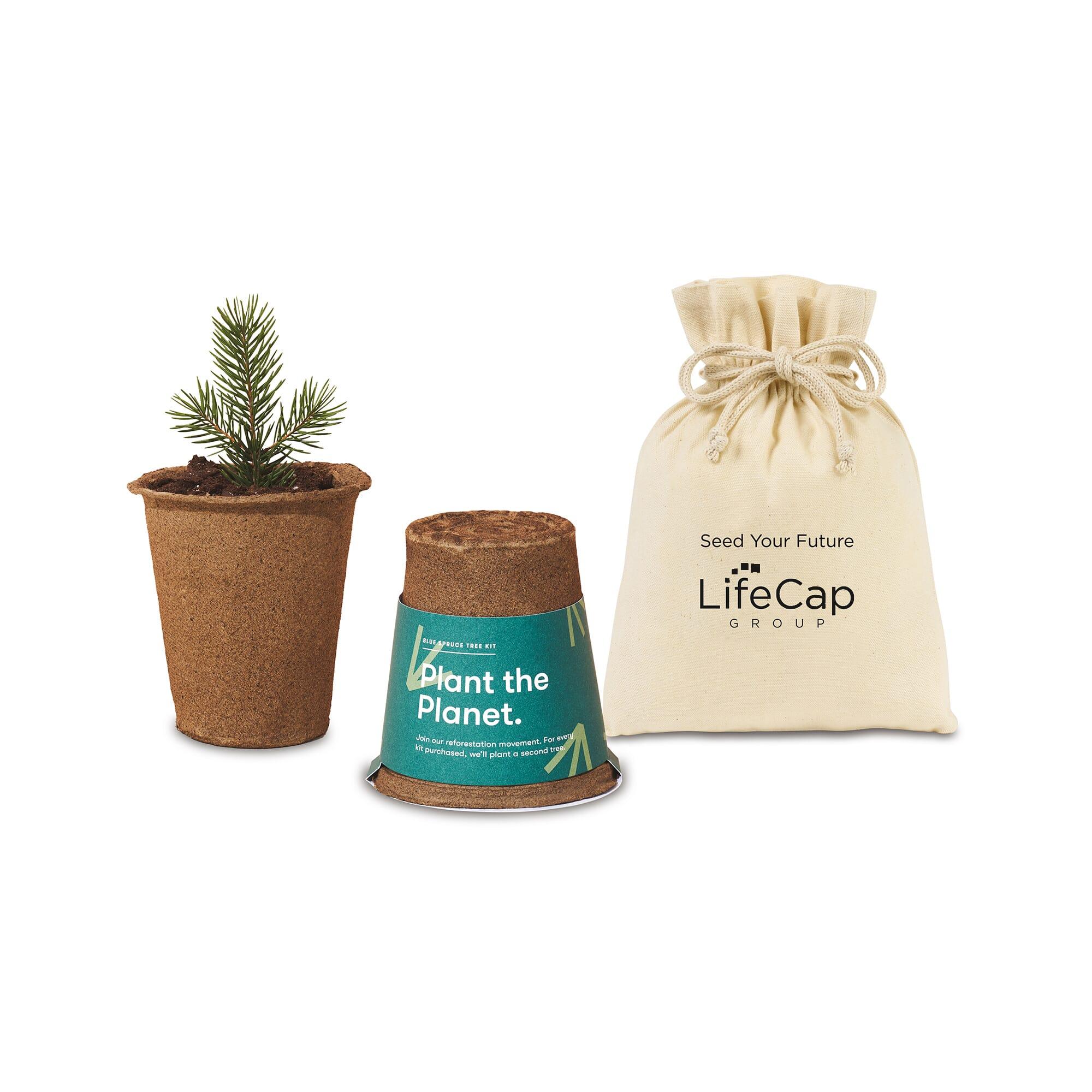 Tree sapling gift set